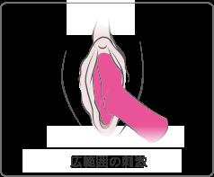 LovenseのAmbiは広範囲の刺激に有効です。
